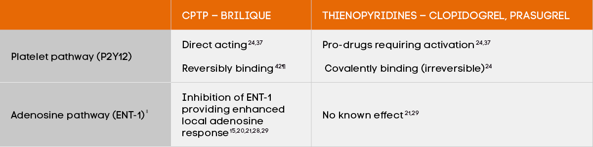 BRILIQUE acts on the platelet pathway (P2Y12) and the adenosine pathway (ENT-1)